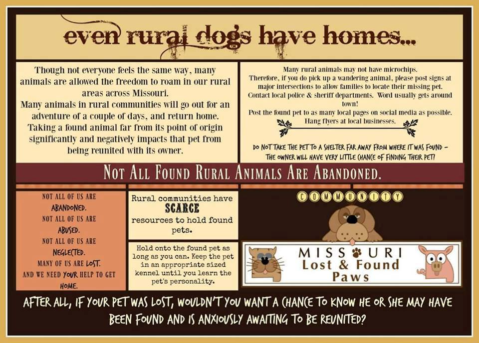 Even Rural Dogs Have Homes (1)